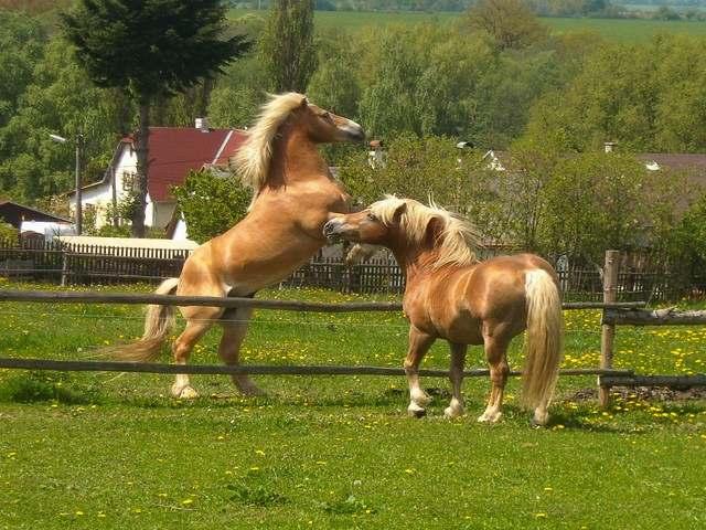 1.7 Koně na ranči